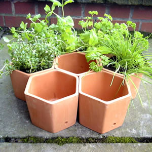 Hexagonal Herb Pots - Set of 7