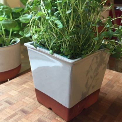 terracotta windowsill herb pot pale grey