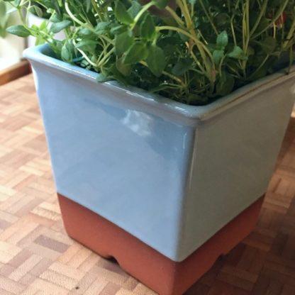 terracotta windowsill herb pot pale blue