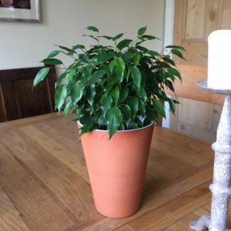 Terracotta Love Pot